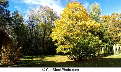 bright autumn leaves in park