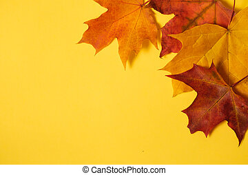 autumn maple leaves on a yellow background