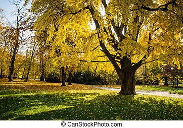 bright autumn park