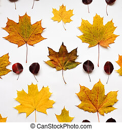 Bright autumn pattern with leaves on white background. Top view, flat lay, view from above