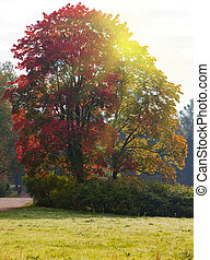 bright autumn tree in park