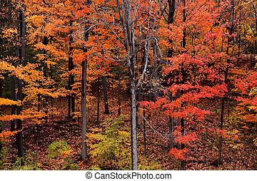 Bright autumn trees