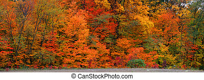 Bright autumn trees - Panoramic view of bright autumn trees