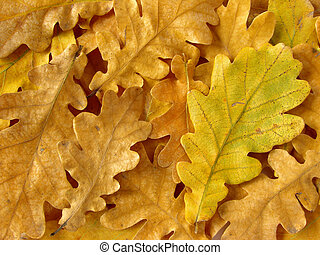 oak leaves background