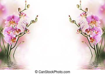Bright background with purple orchids, which are reflected in the water