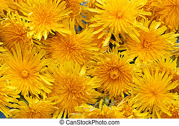 Bright beautiful background of yellow flowers