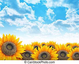 Bright Beautiful Flower Sunflower Background