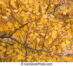Bright beautiful yellow autumn leaves
