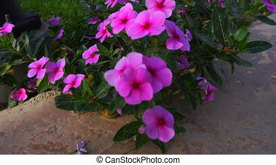 bright blooming pink flowers