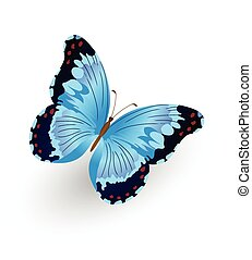 Bright blue butterfly isolated