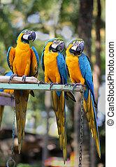 bright blue parrots macaw