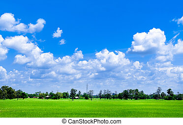 Bright blue sky and cloud with meadow tree and green rice fields