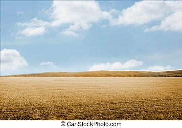 Bright brown landscape