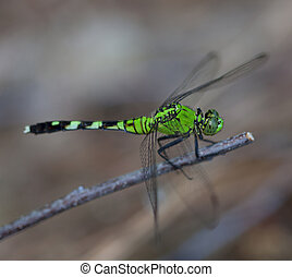 Bright bug