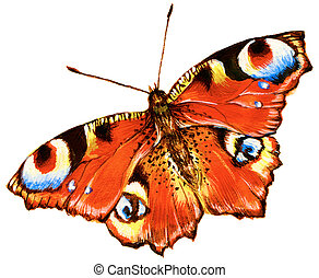 Bright butterfly - Painting of bright butterfly over white...