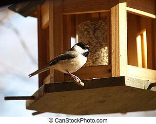 Bright Chickadee - Chickadee alights on a feeder