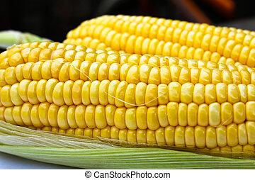 Bright color sweet corn.