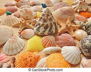 Bright colored sea shell background