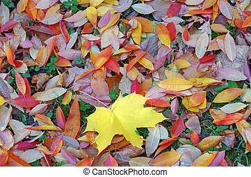 Bright colorful autumn leaves as a background