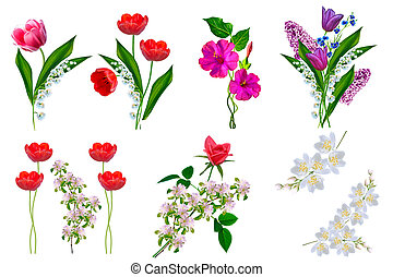 Bright colorful spring flowers isolated on white background.
