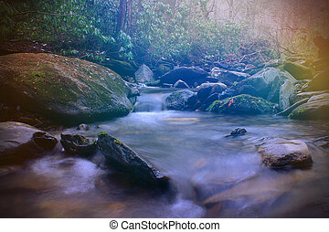 Bright Colorful Sunlight Rays over a Small Creek River in the Empty Natural Forest