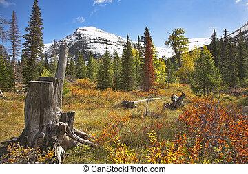 Bright colors of autumn