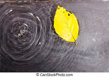 Bright colourful autumn leaf floating in water