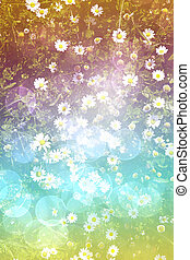 bright daisy field background