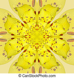 Bright Daylily kaleidoscope - Photograph of a living yellow...