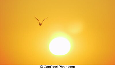 Bright evening sunshine and flying sea gull - Bright golden...
