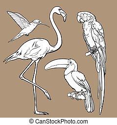 exotic tropical birds - flamingo, macaw, hummingbird and toucan