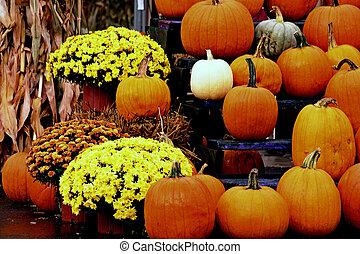 Bright Fall Pumpkins and Mums