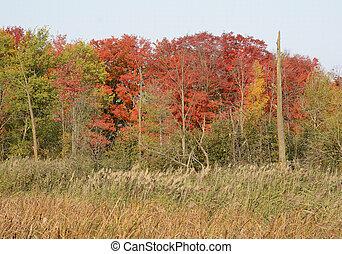 Bright fall scene in Ontario