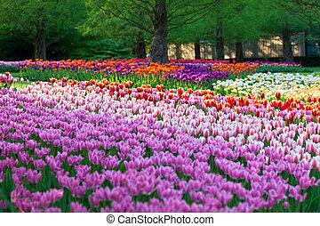 Bright flowerbed in Keukenhof - famous Holland spring flower park