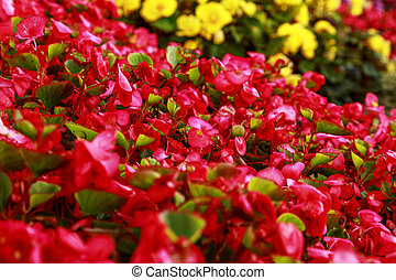 Bright flowerbed on a summer sunny day. Pink and yellow flowers. Close-up of garden bed. Blurred floral background. Shallow depth of field.
