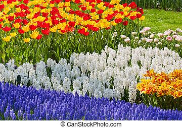 Bright flowerbed in Keukenhof - famous Holland spring flower...