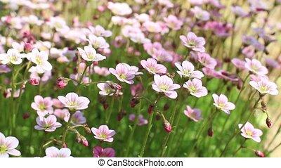bright flowers Flowering moss - Flowering moss many bright...