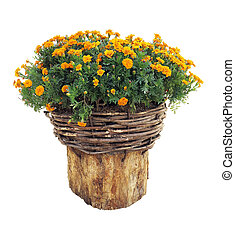 Bright flowers in wicked basket on cut log isolated over white