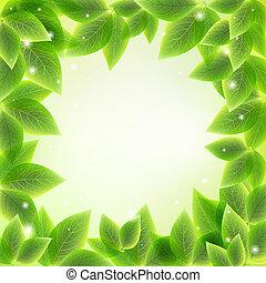 bright fresh green leaves  background