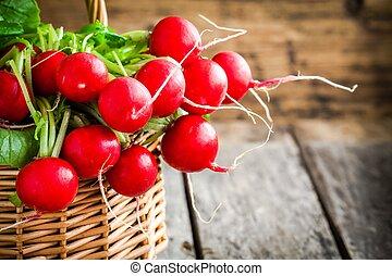 bright fresh organic radishes with leaves