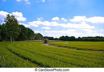 bright green agriculture farmland w