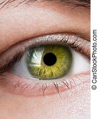 bright green eye close up