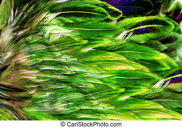 Bright green feather group of some bird