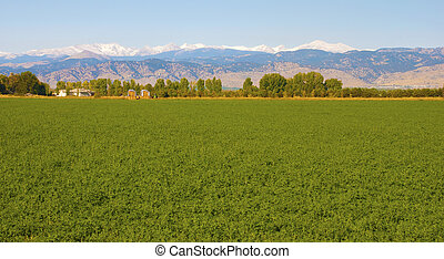 Bright green agricultural field in front of distant snowcapped mountains