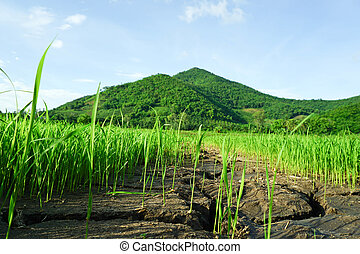 Bright green grass field and mountains