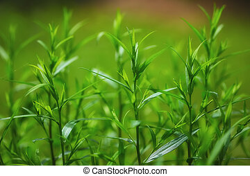 bright green grass on background