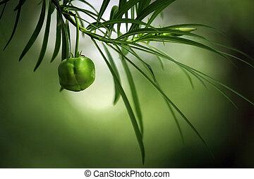 bright-green, hojas, con, fruta
