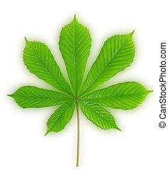 Bright green leaves of chestnut