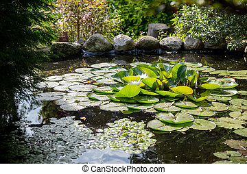 Bright green lilly pad's cover the surface of a pond.summer river with white lilies.quiet summer river.pond scenery with water lilly.water lily floating on small pond
