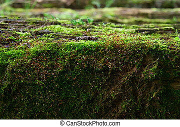 Bright green moss in the forest